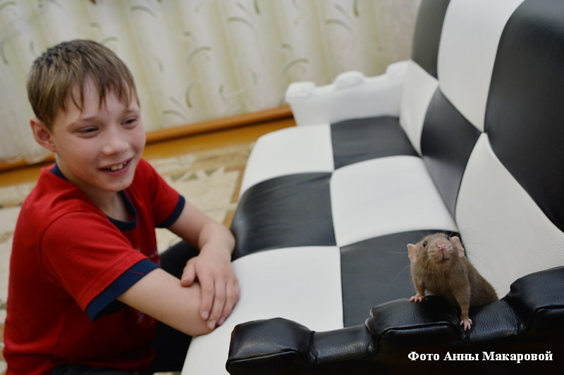 Крысенок руки лижет