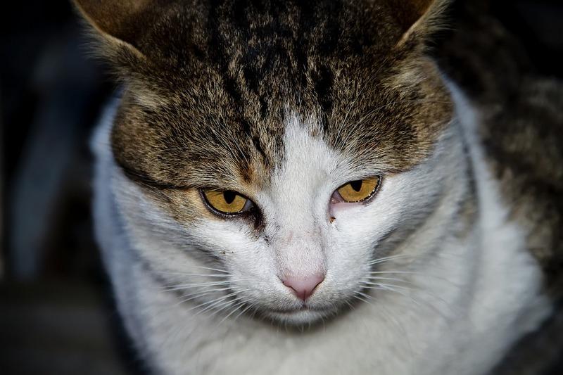 Бездомные животные Курган Зауралье собаки кошки