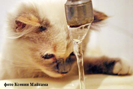 Курганцы 3 года выплачивали занесуществующую горячую воду