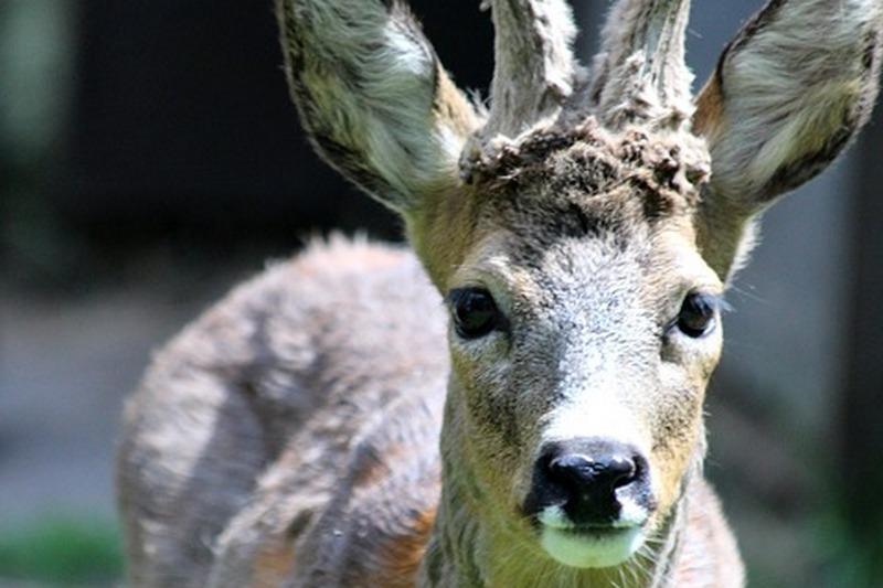 курган новости браконьеры
