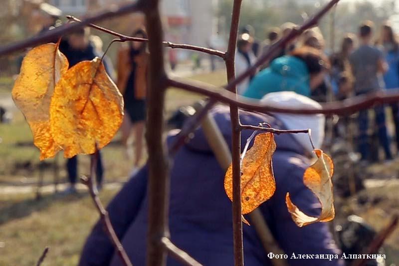 В Кургане посадили яблоневую аллею