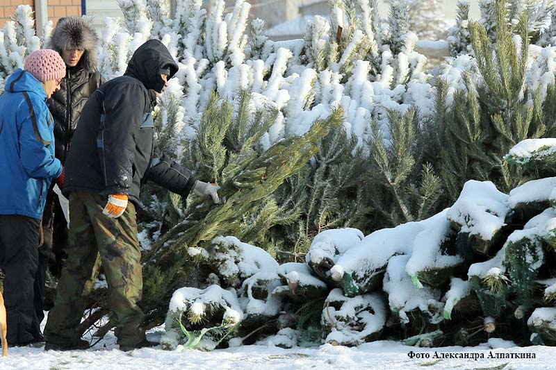 курган новости новогодние елки и ярмарка