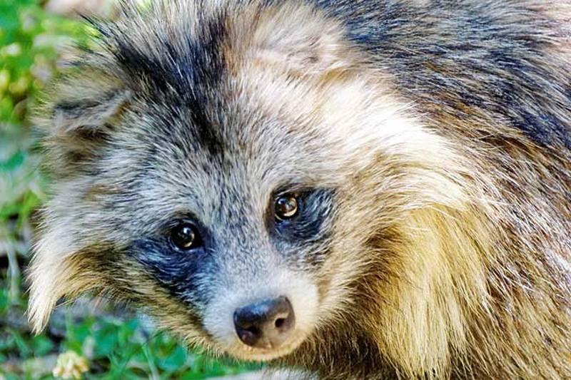 Профессионалы называют число кузбассовцев, укушенных животными— Профилактика бешенства