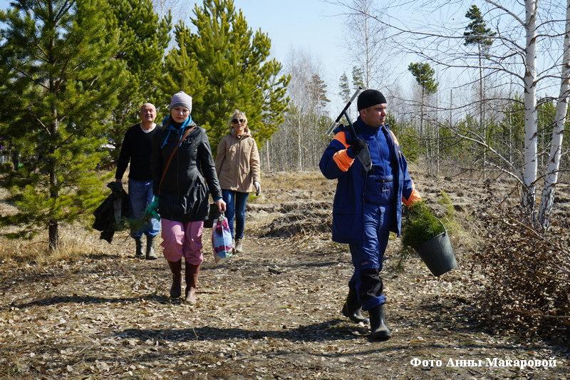 Зауральцы присоединилось к Всероссийской акции «День посадки леса».