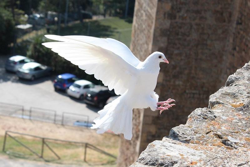 Ноовсти Курган За кражу голубей зауралец может получить 5 лет лишения свободы