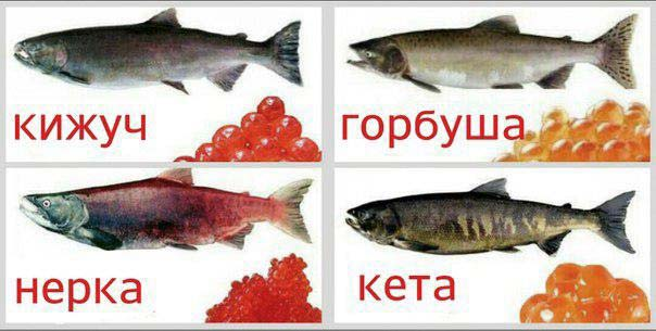 Новости Курган рыба