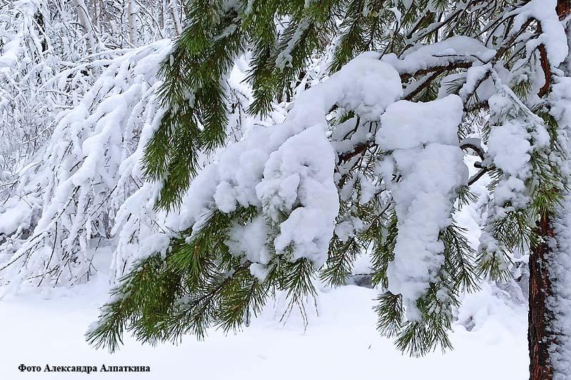 Первый снегопад