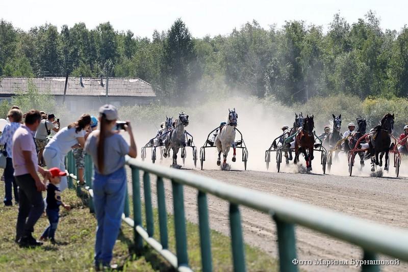 14 августа на курганском ипподроме прошли традиционные межрегиональные конноспортивные соревнования.